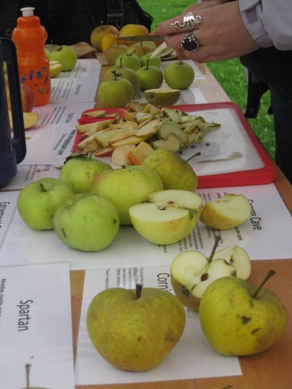 British Apple Tasting