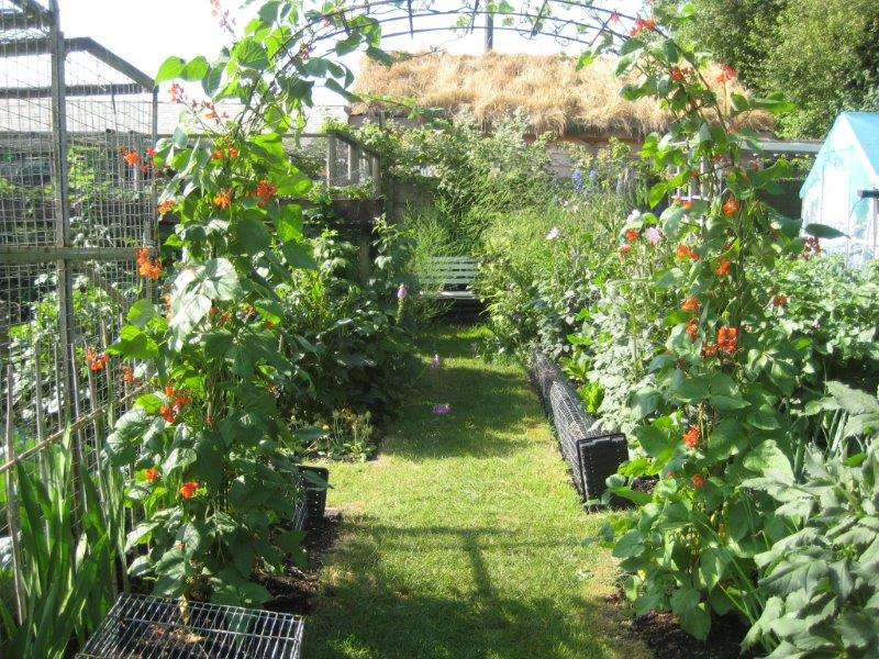photo of the allotments