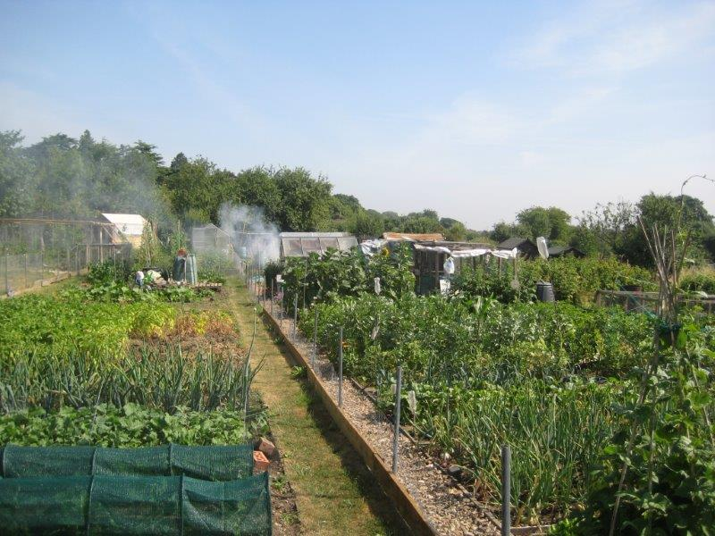 sunny day at the allotment