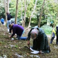 Bluebell Planting
